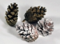 Mobile Preview: Kiefernzapfen